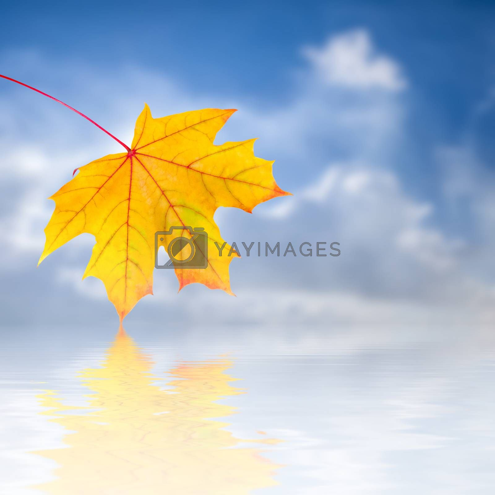 Autumn background with red, yellow and orange foliage