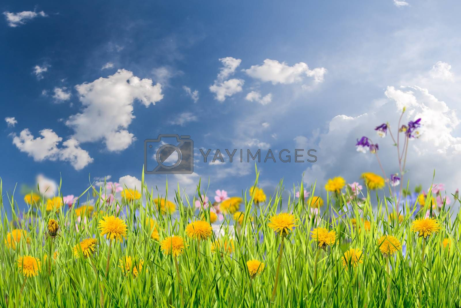 Nature green background with grass and flower