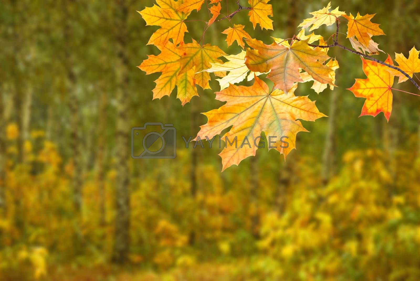 Autumn background with foliage on branch