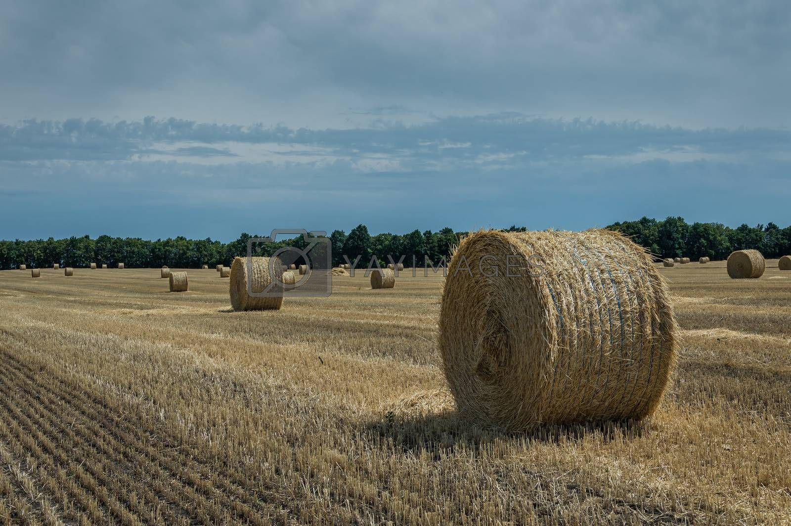 Royalty free image of Field with haystacks by firewings