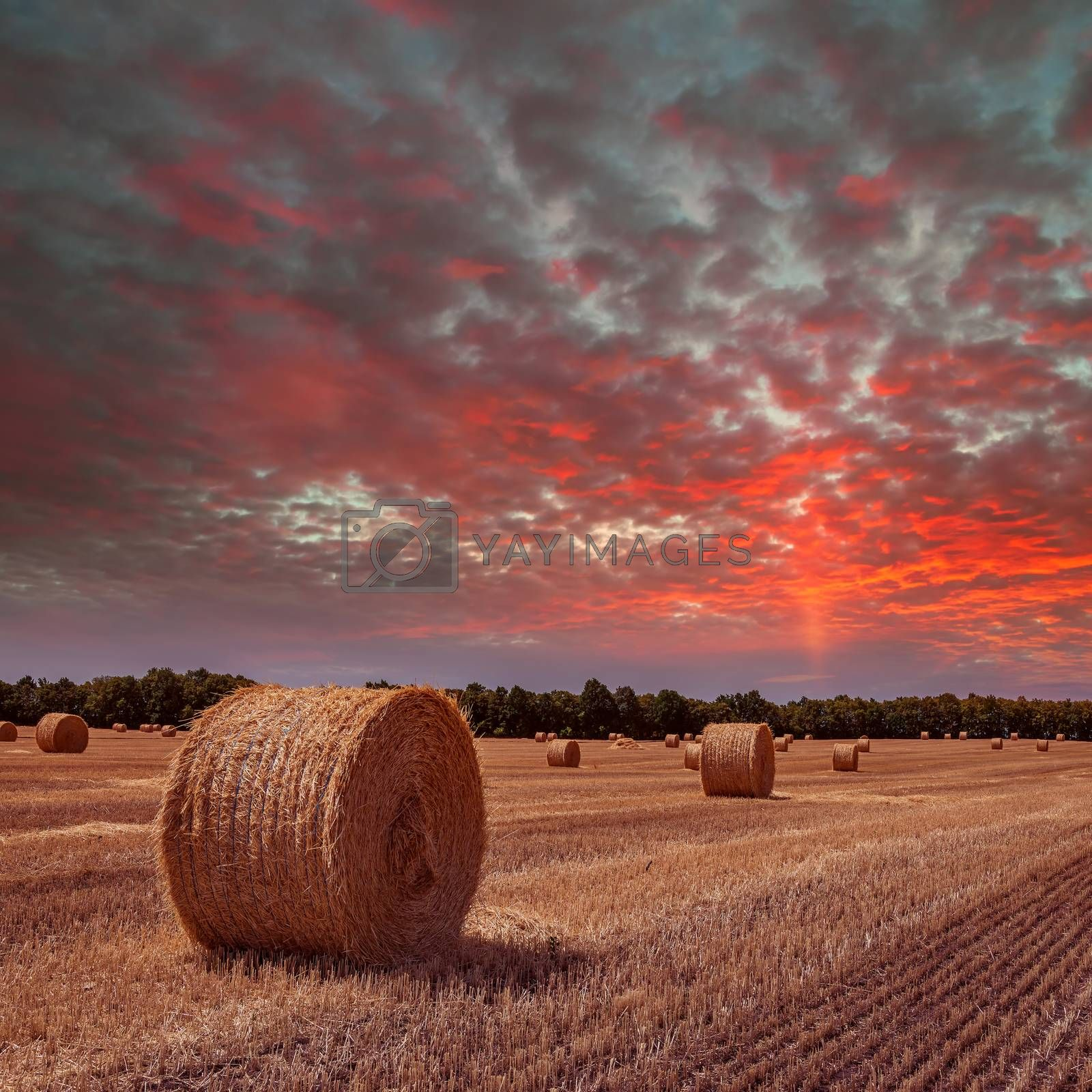 Royalty free image of Field with haystacks on sunset by firewings