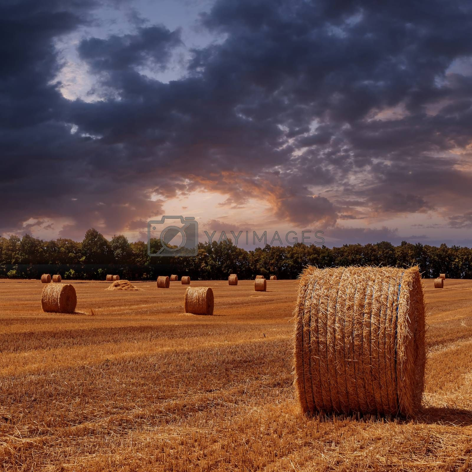 Royalty free image of sloping wheat field by firewings