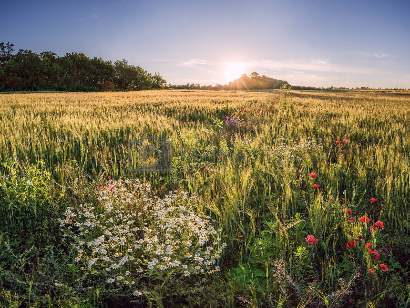 Royalty free image of Summer landscape by firewings