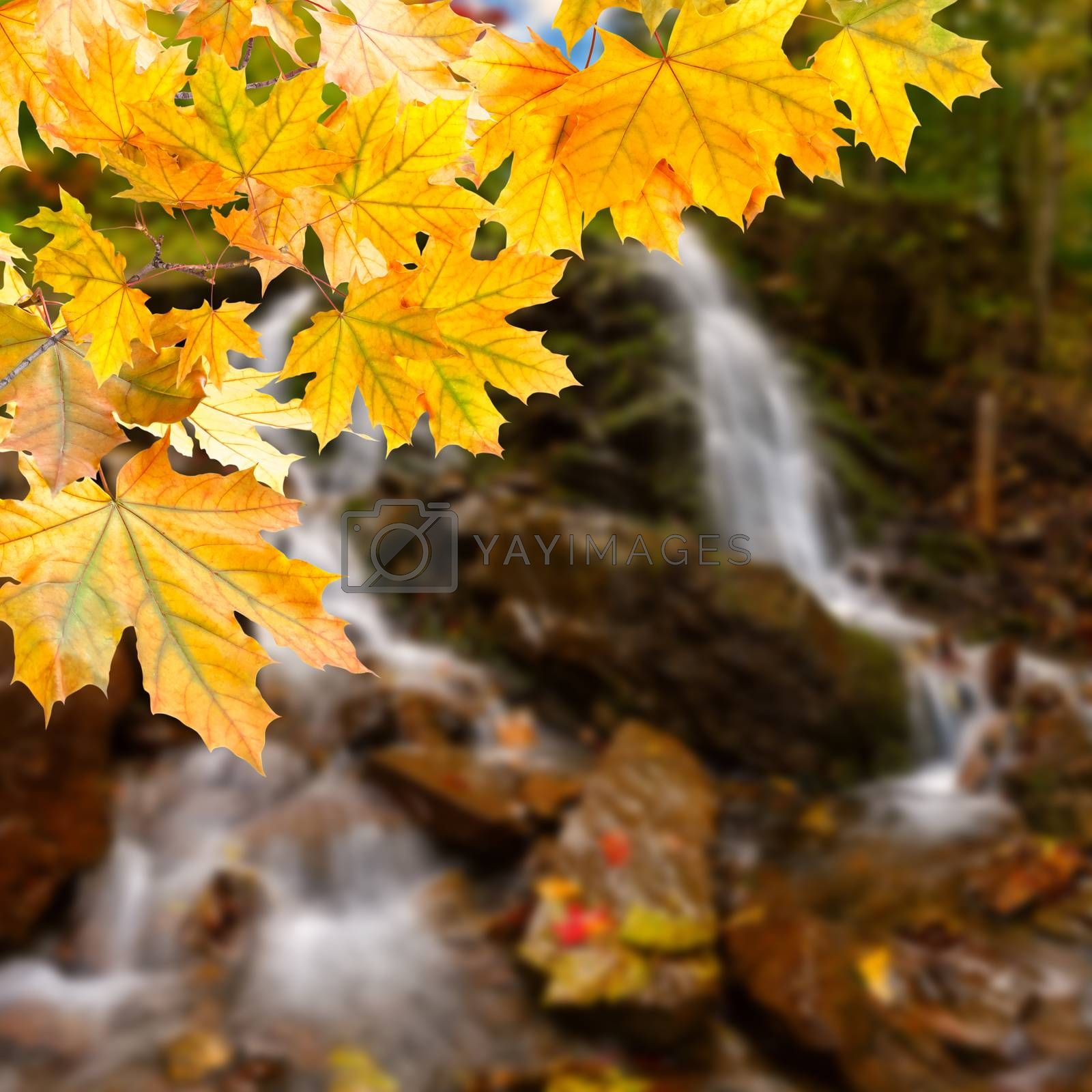 Royalty free image of Autumn background by firewings
