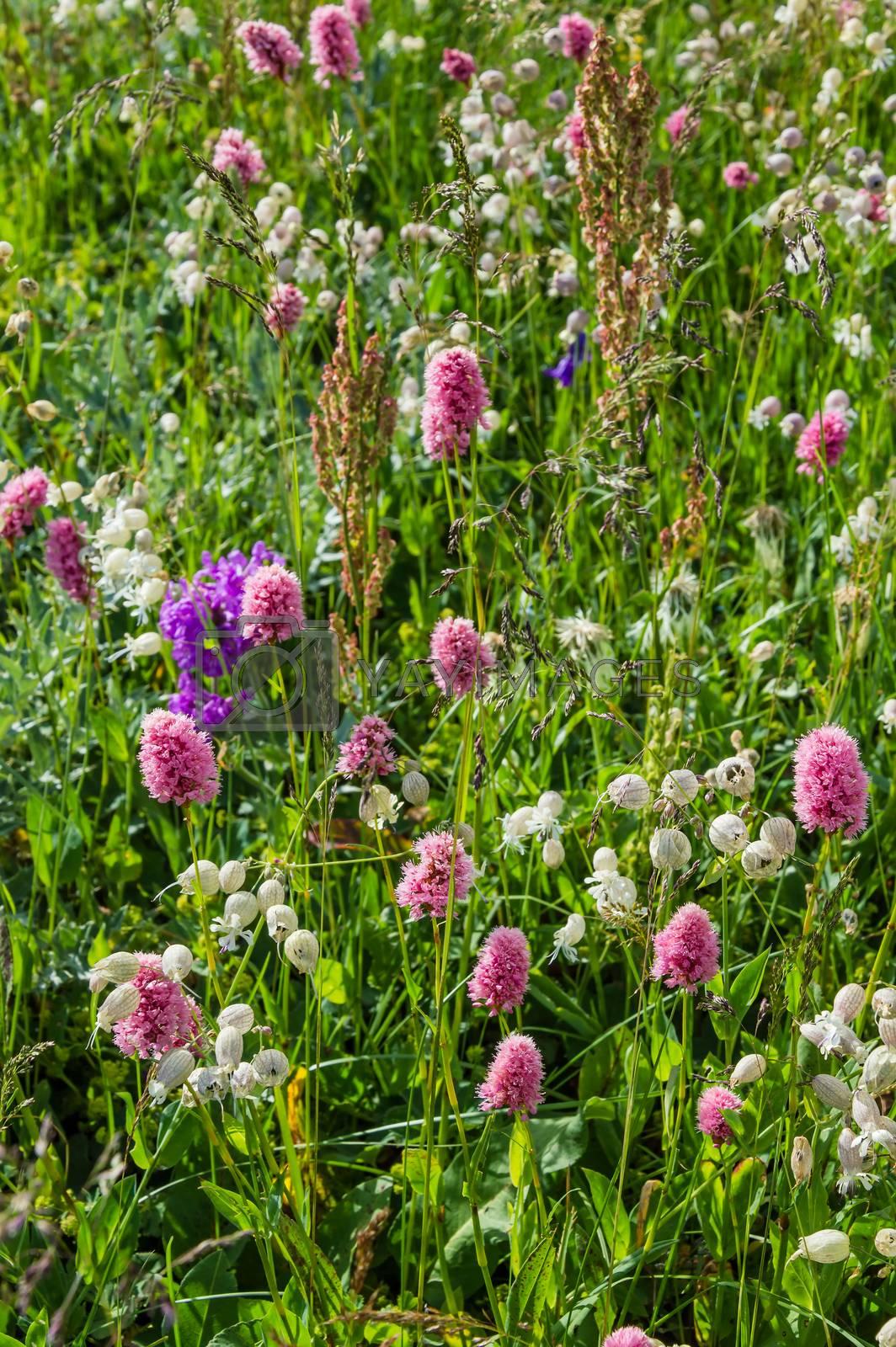 Royalty free image of Flower meadow by firewings