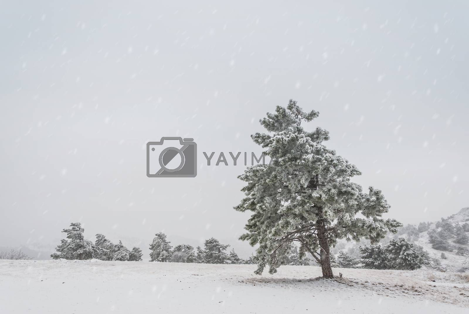 Surrealistic winter landscape with snowfall