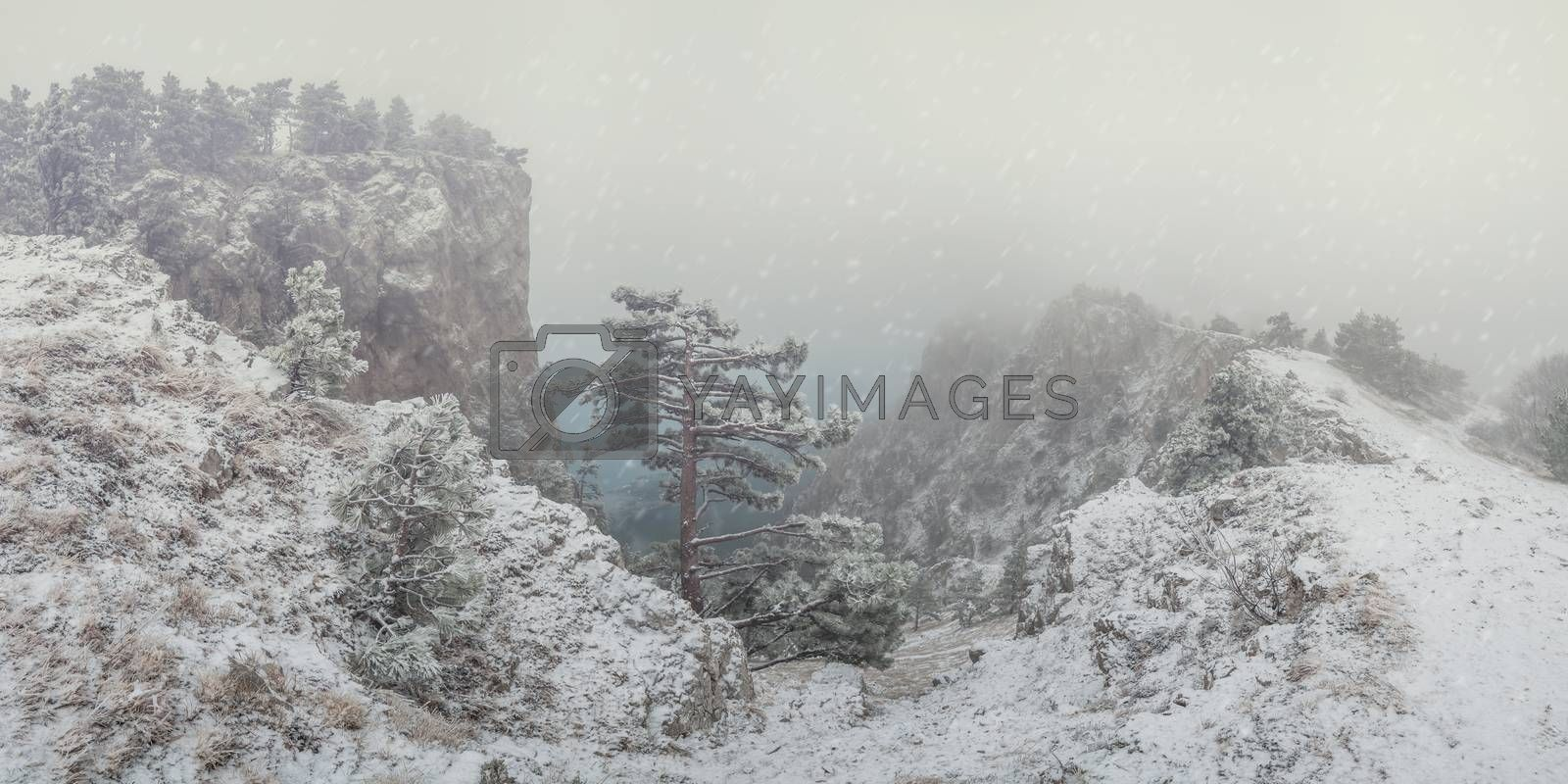 Royalty free image of Winter landscape by firewings