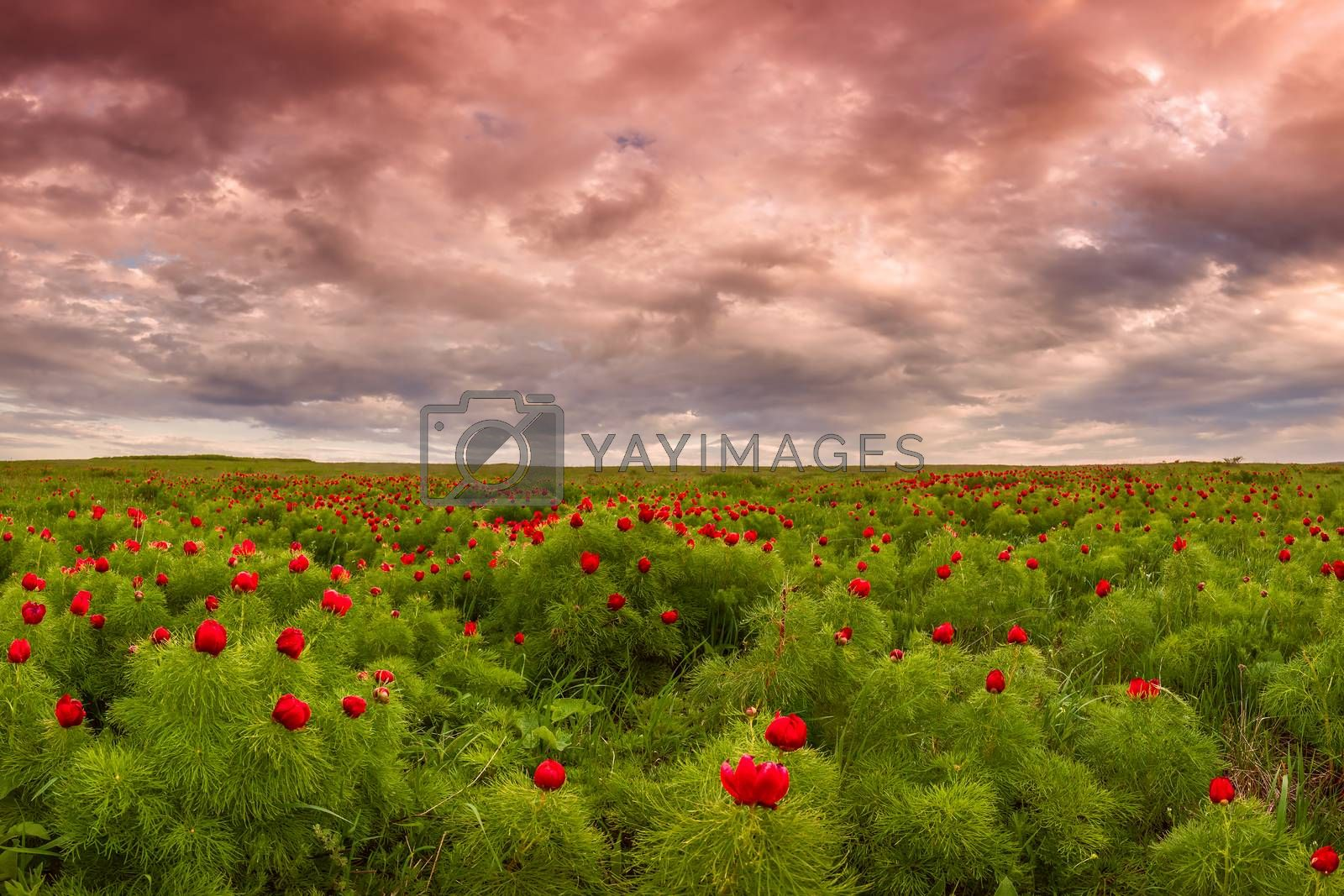 Royalty free image of Wild steppe by firewings