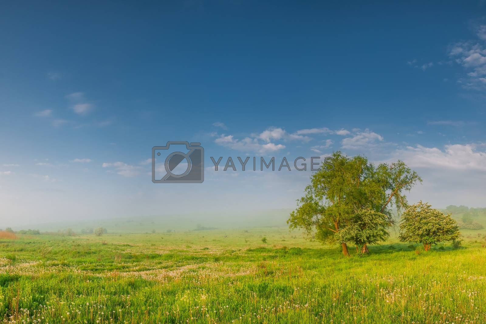 Morning summer meadow with dandelion, trees and fog