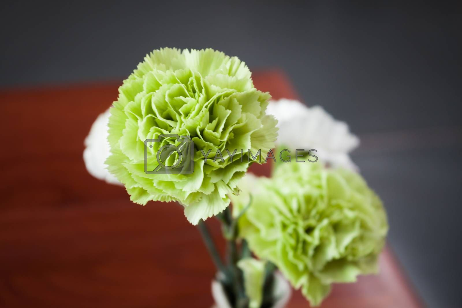 Green and white flowers background, stock photo
