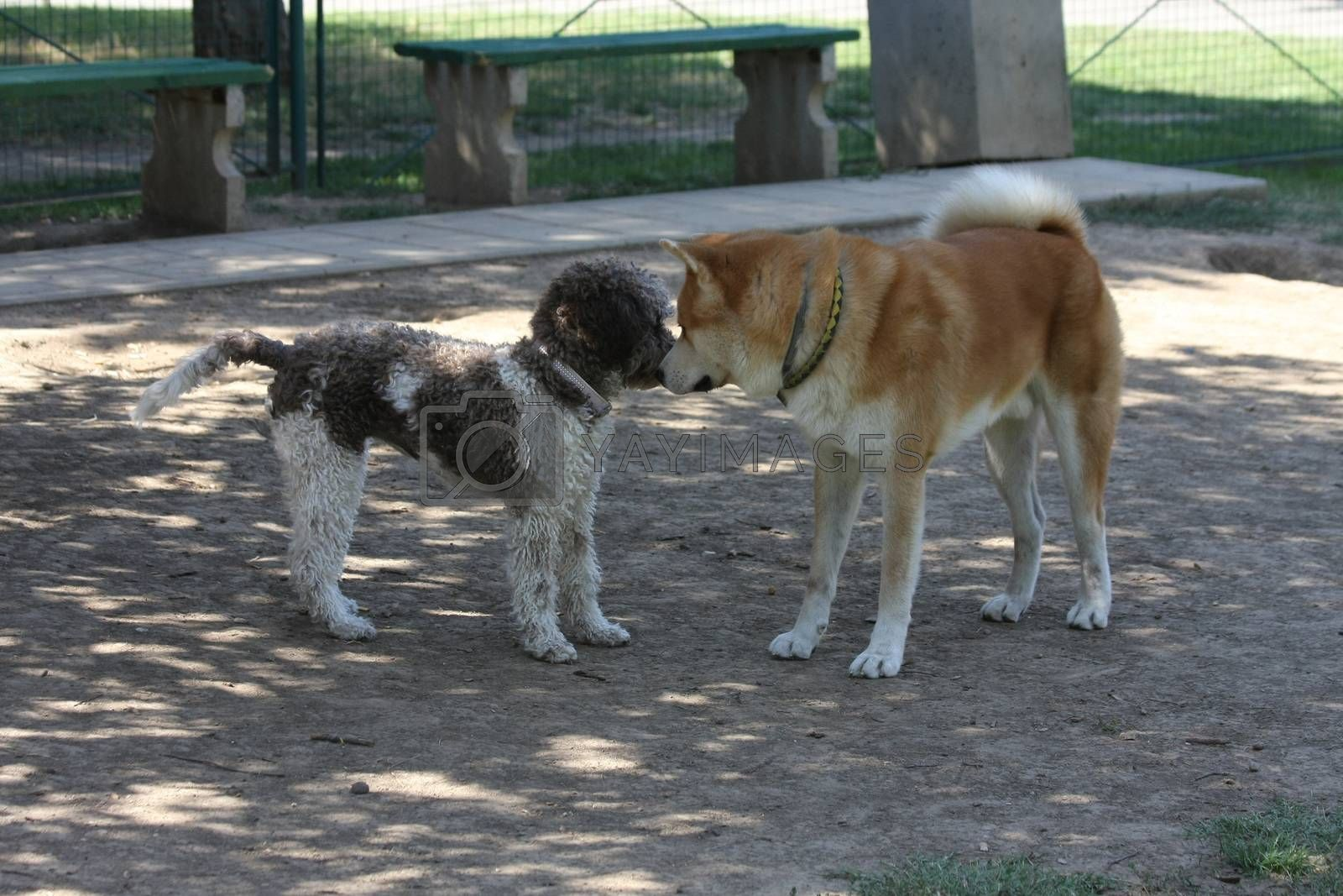 Dogs introducing each other in dog park
