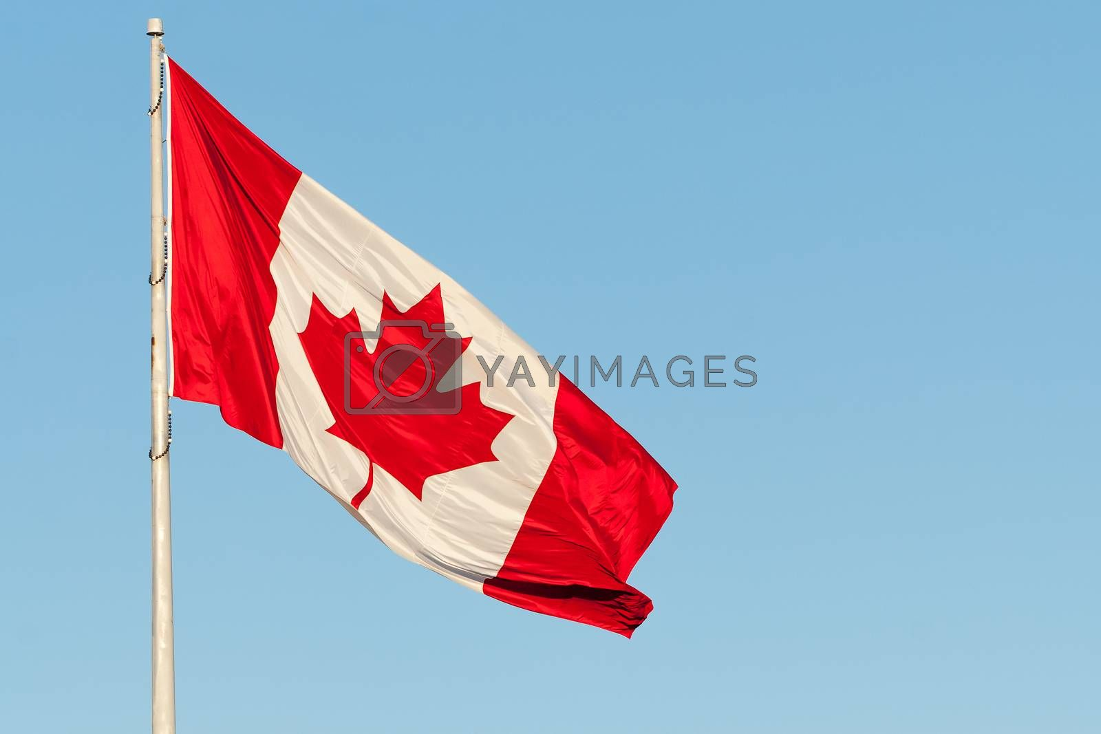 The Canadian flag waves in a breeze against a clear blue sky.