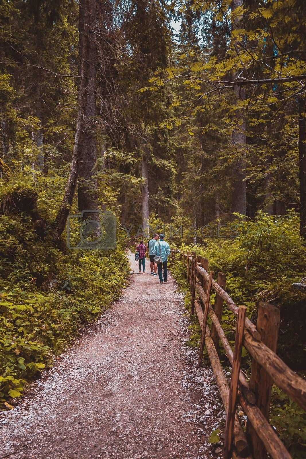 people are walking in a pine forest Alpine