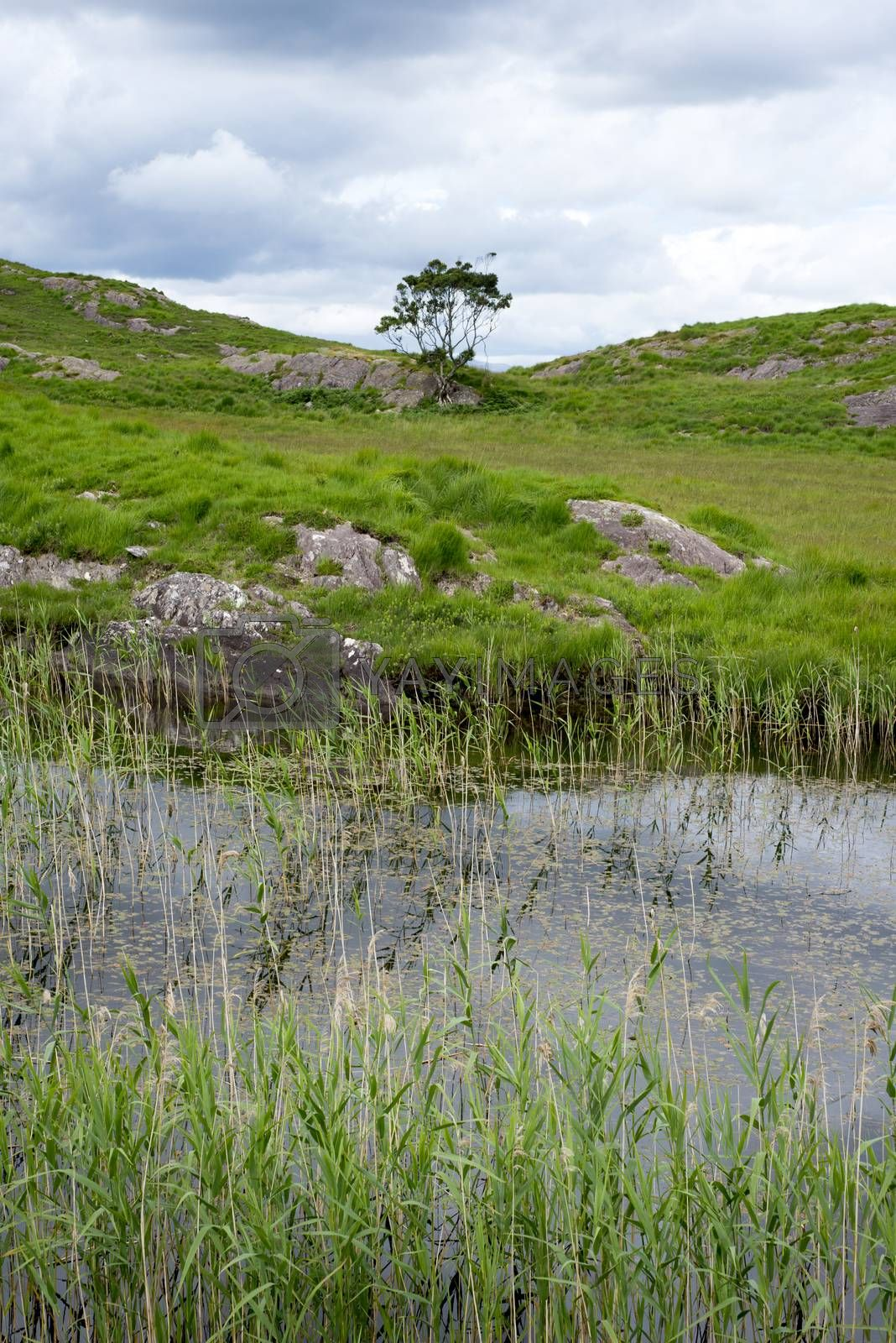 river reeds and lake on the kerry way in irelands wild atlantic way