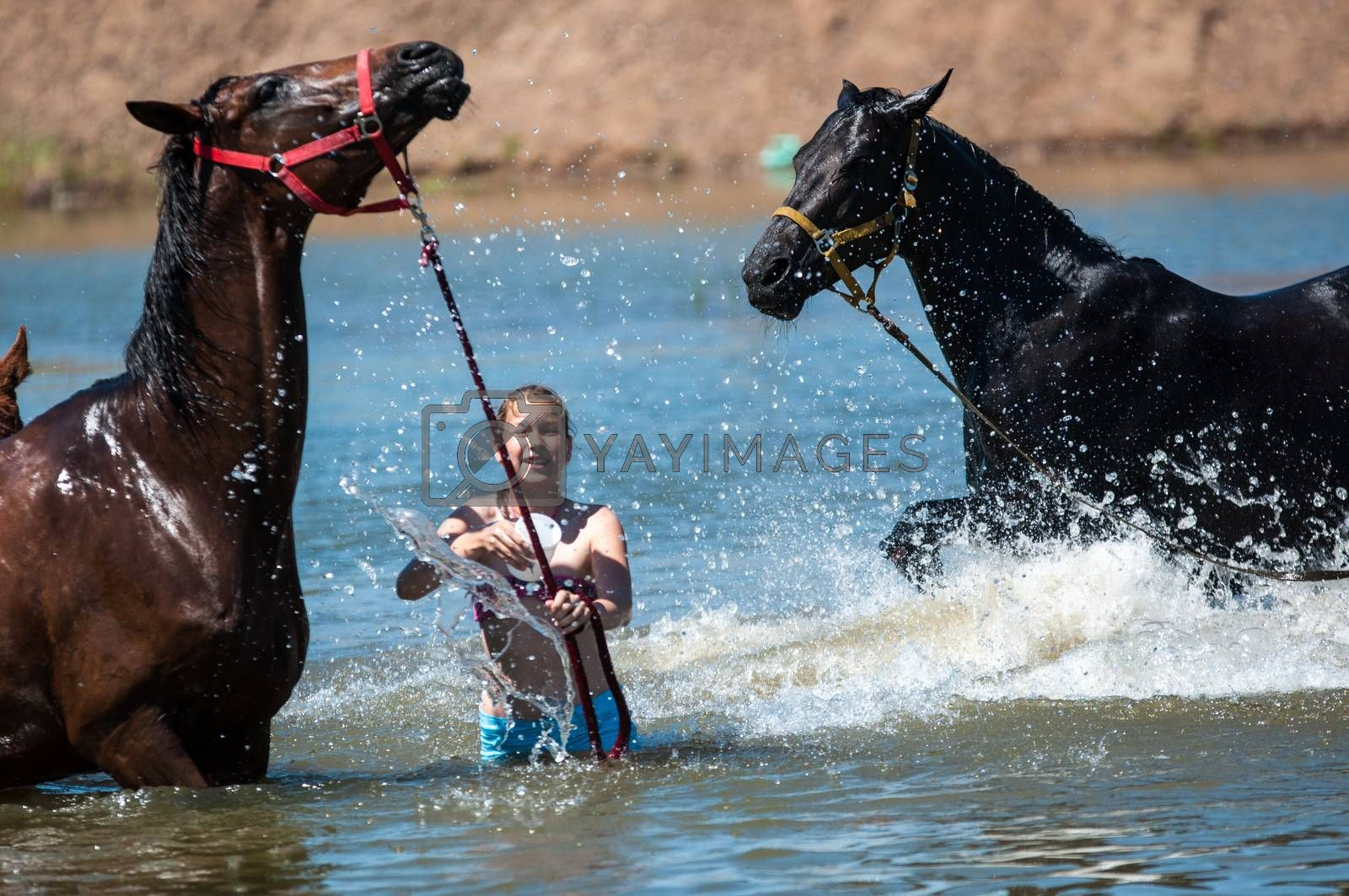 Orenburg, Russia - 18 June 2016: Girl rider bathing horses at the pond