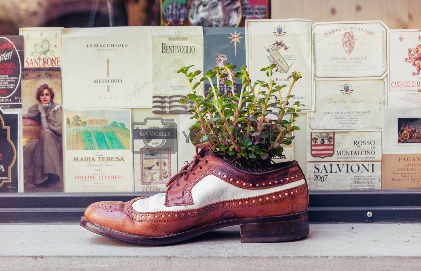 FLORENCE, ITALY - JULY 12, 2016: Old leather shoe as decorative flower pot in a background of vintage wine labels in Florence, Italy