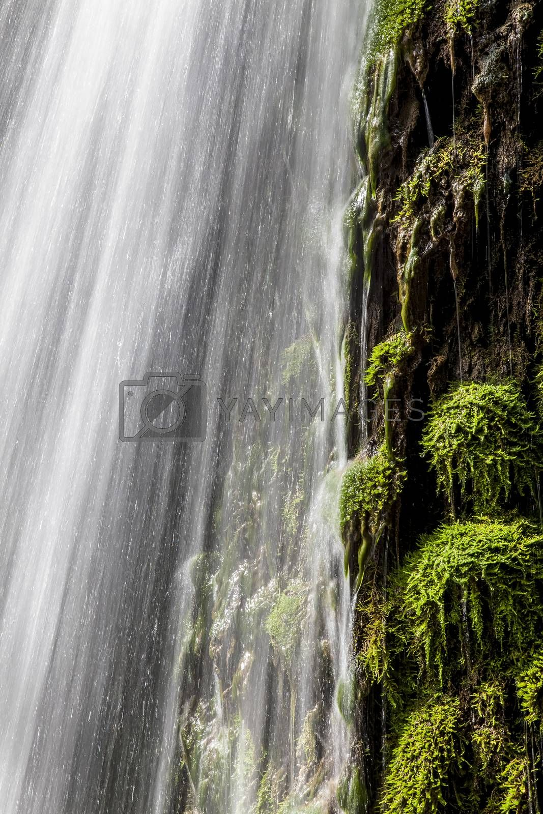 Fresh green moss and moving water of a gorgeous waterfall shoot with slow shutter speed