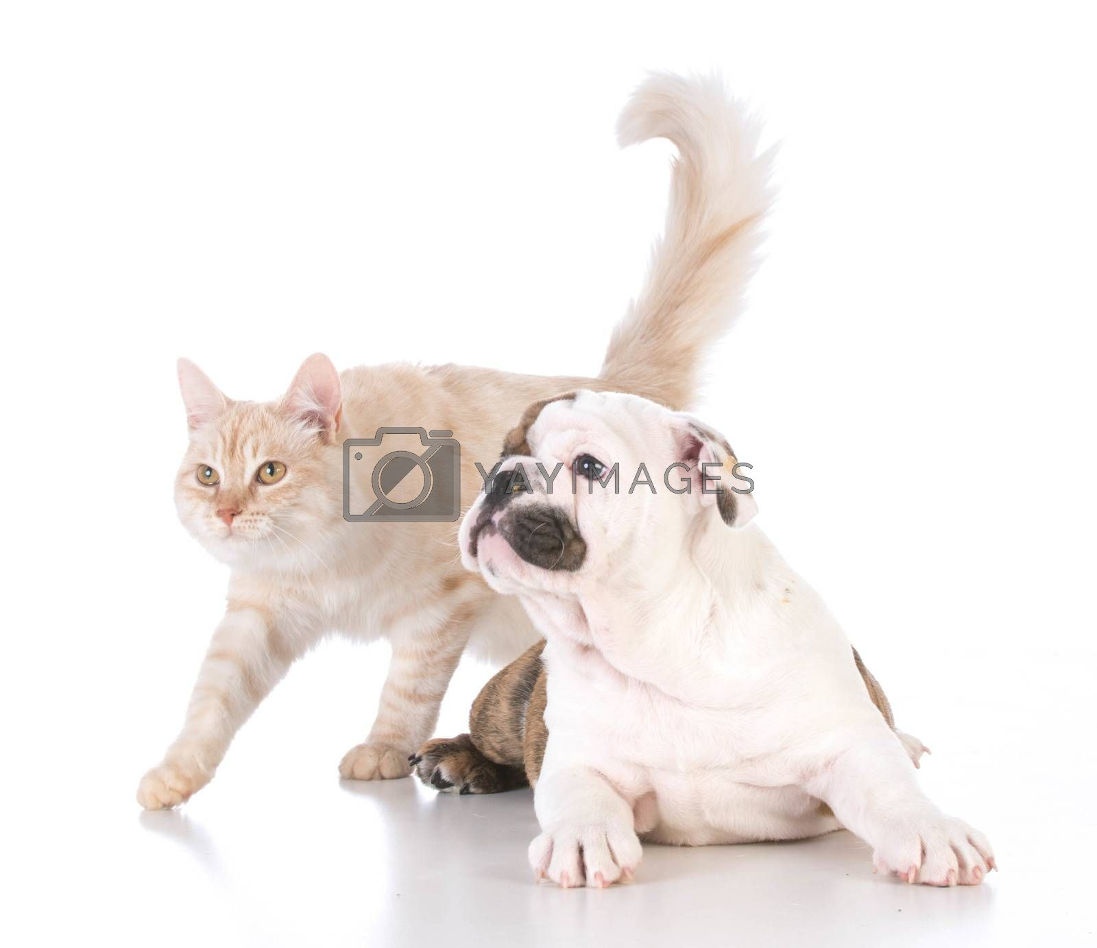 dog and cat by willeecole123