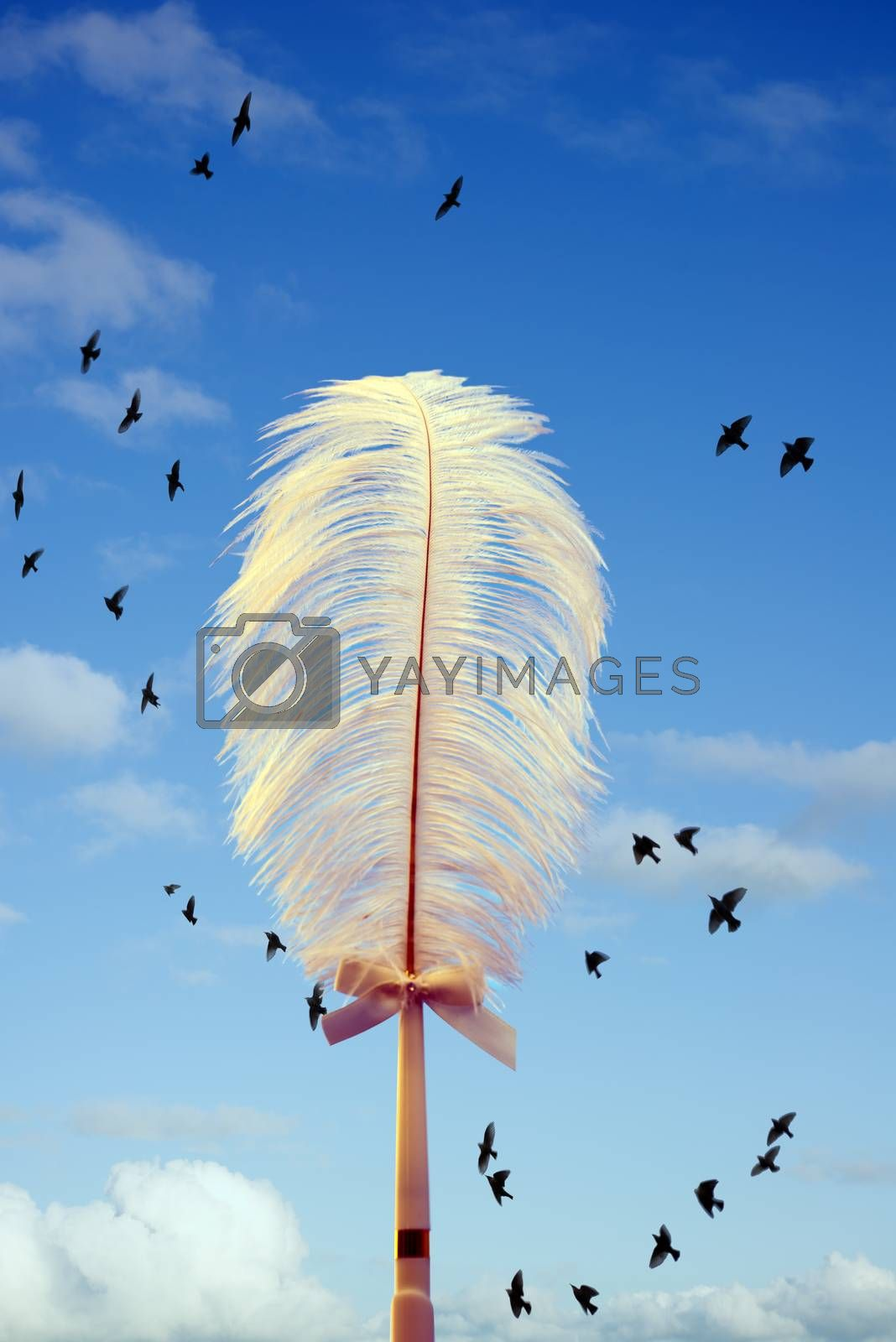 white feather and birds flying by morrbyte