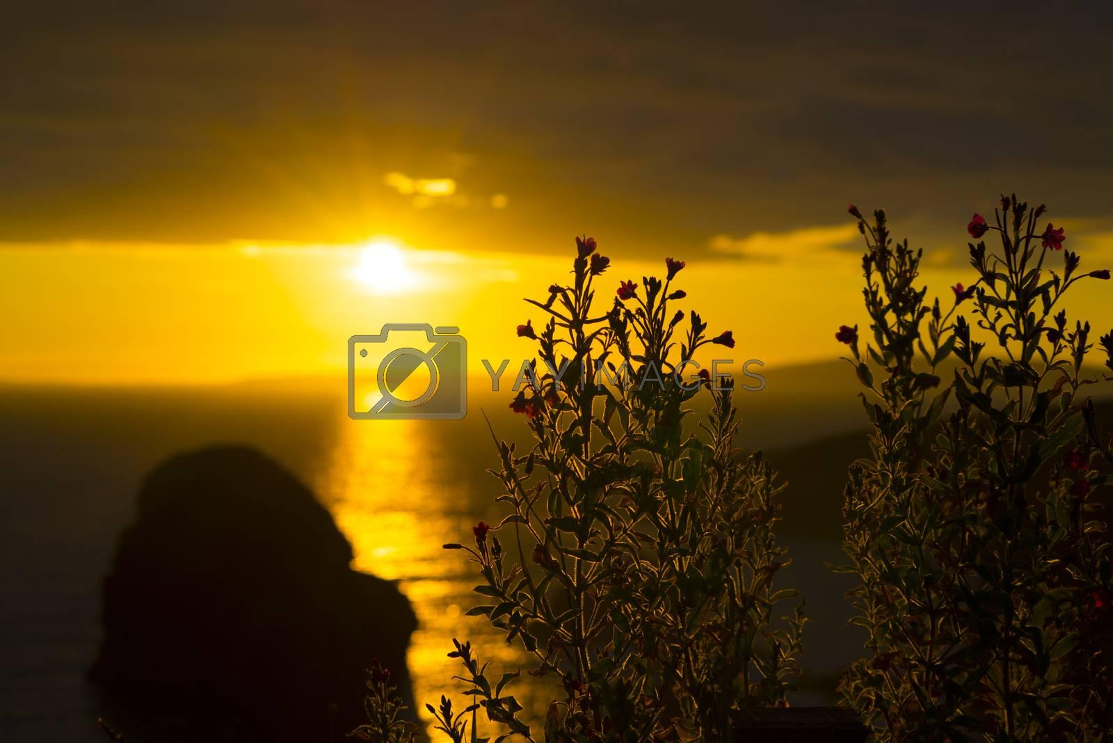 wild atlantic way sunset flowers by morrbyte