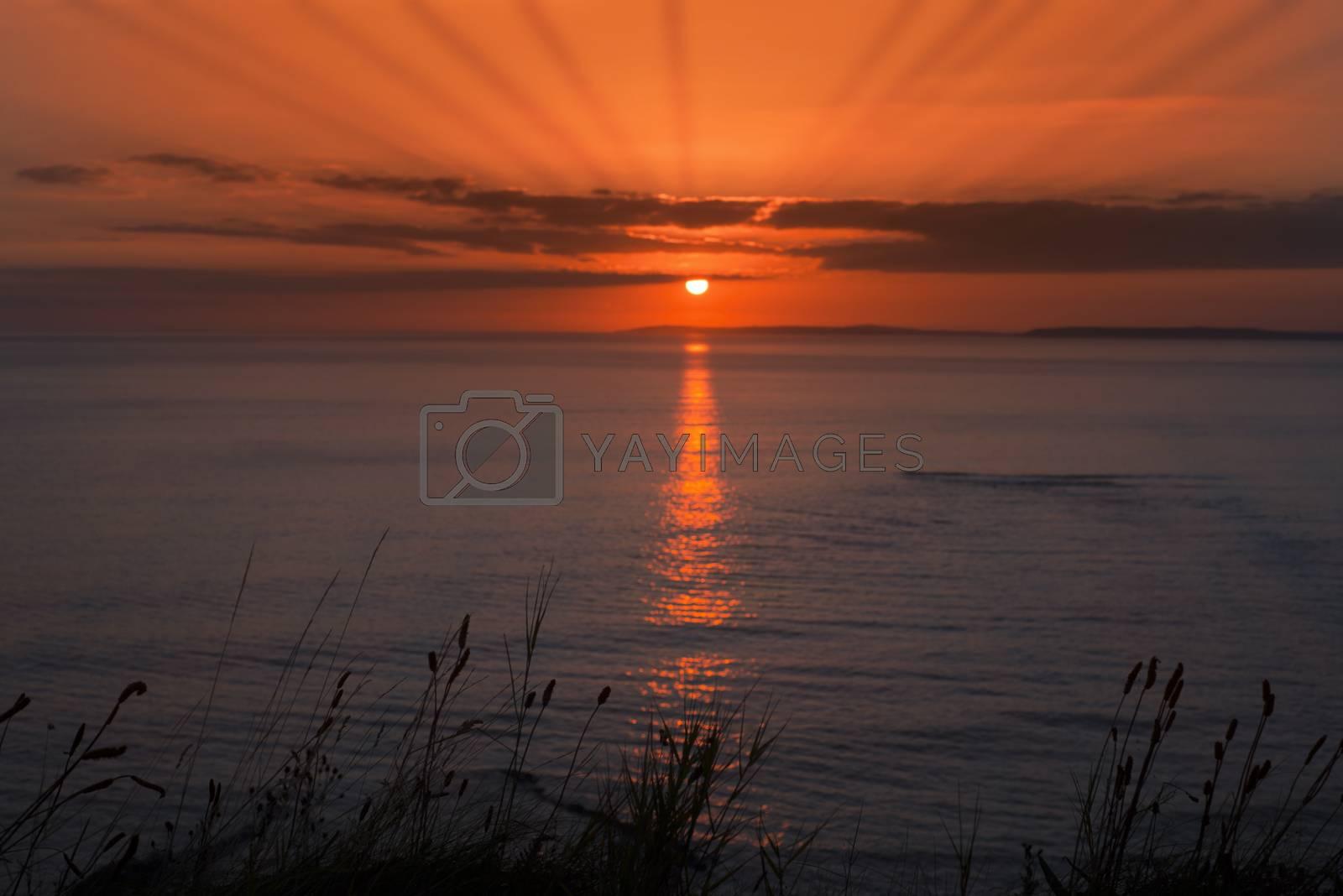 wild tall grass orange sunset by morrbyte