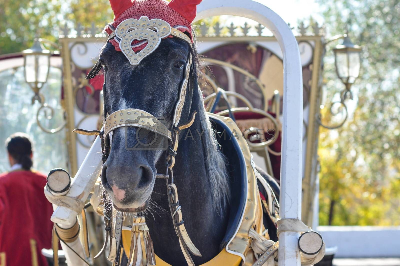 Wedding horse harnessed to a carriage for bride and groom