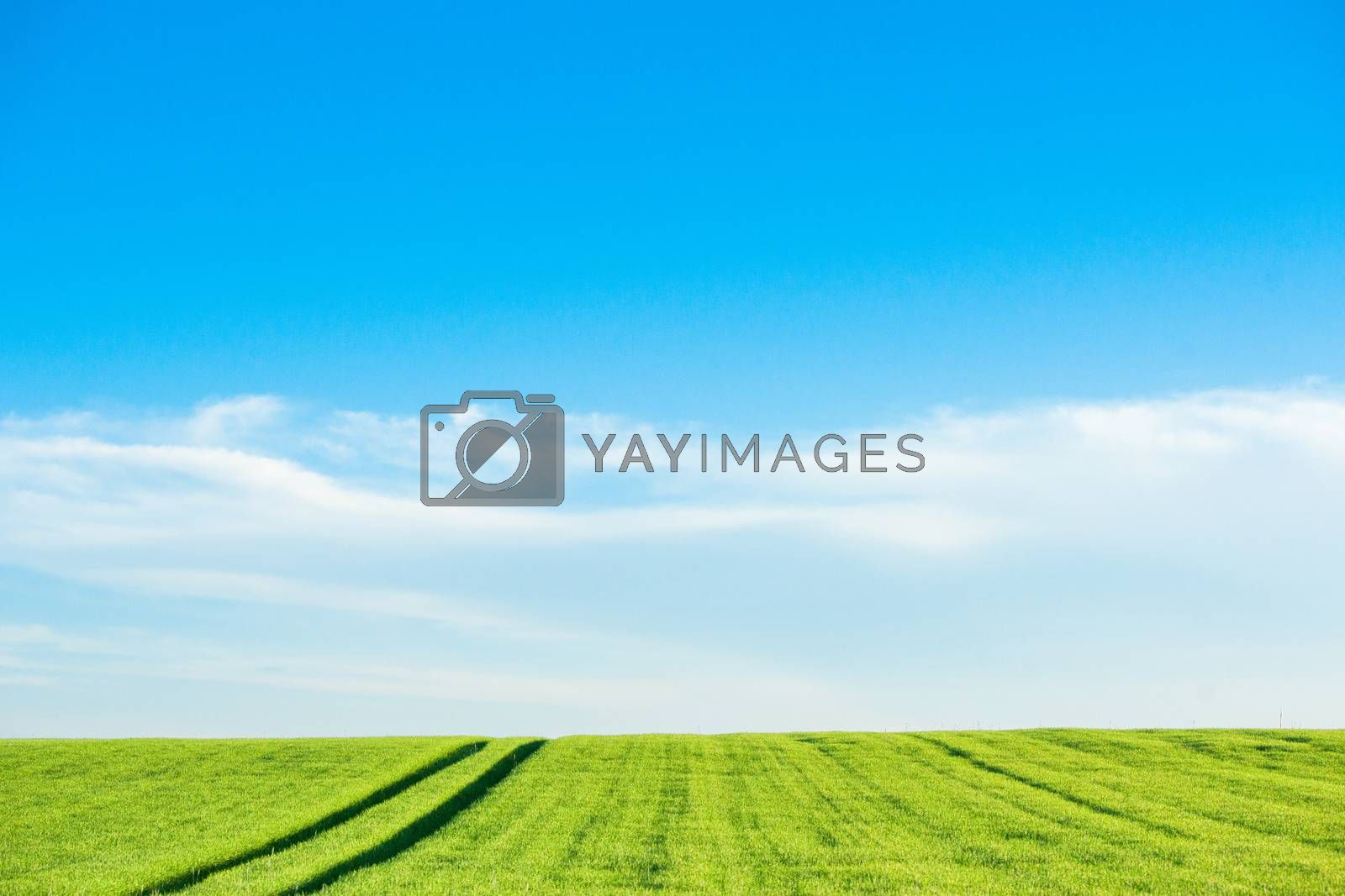 Countryside landscape with green crops and field tracks