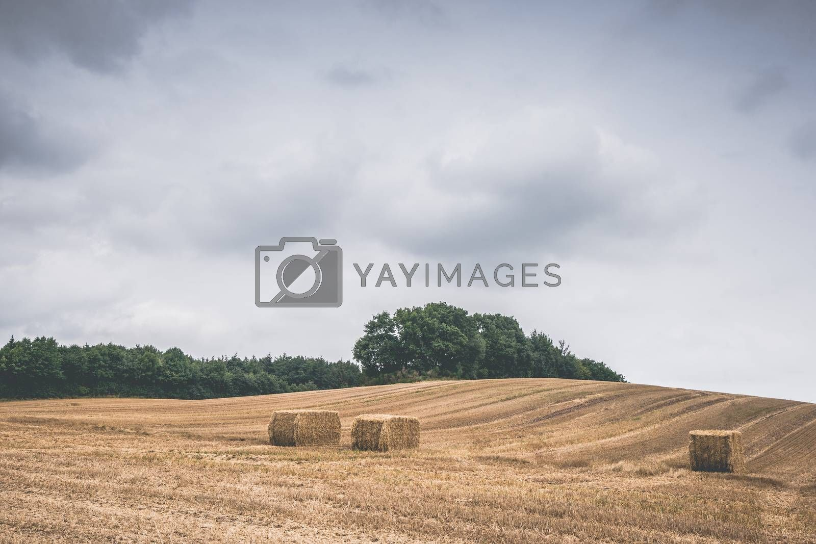 Countryside landscape with hay bales on a harvested field in cloudy weather