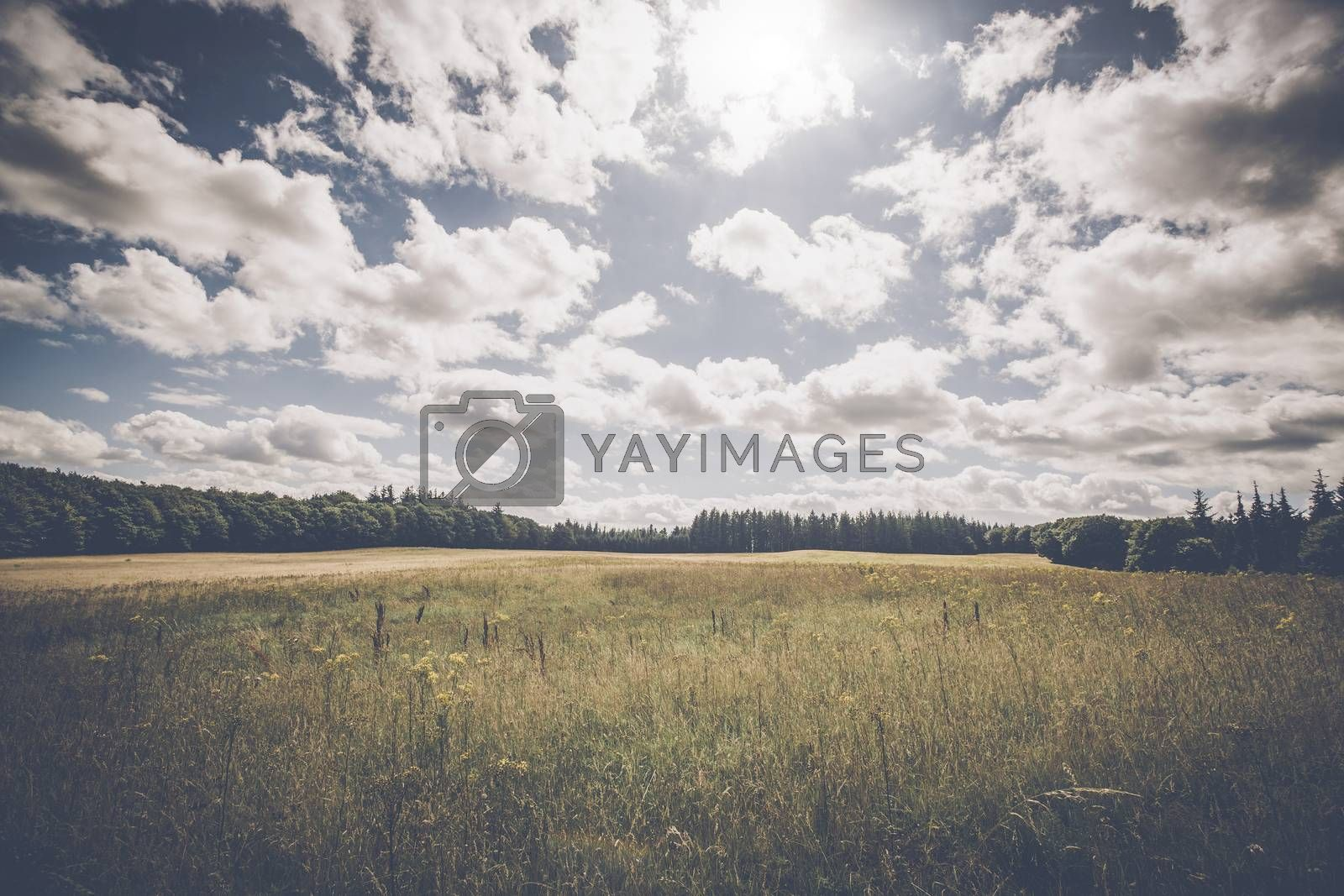 Countryside landscape with plains of flowers and cloudy weather