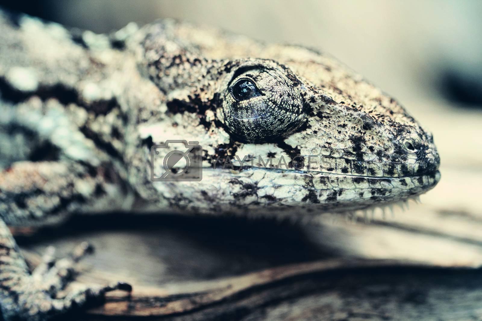 Lizard close up macro animal portrait photo