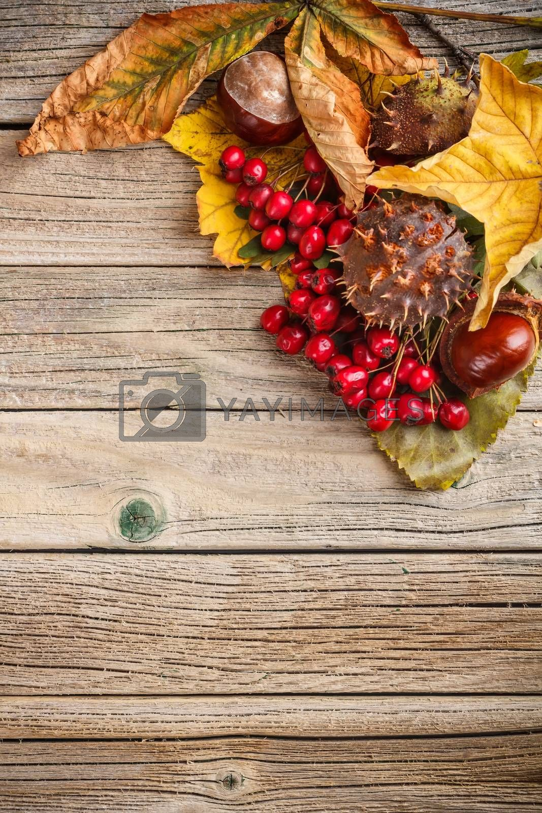 Autumn leaves with hawthorn and chestnuts