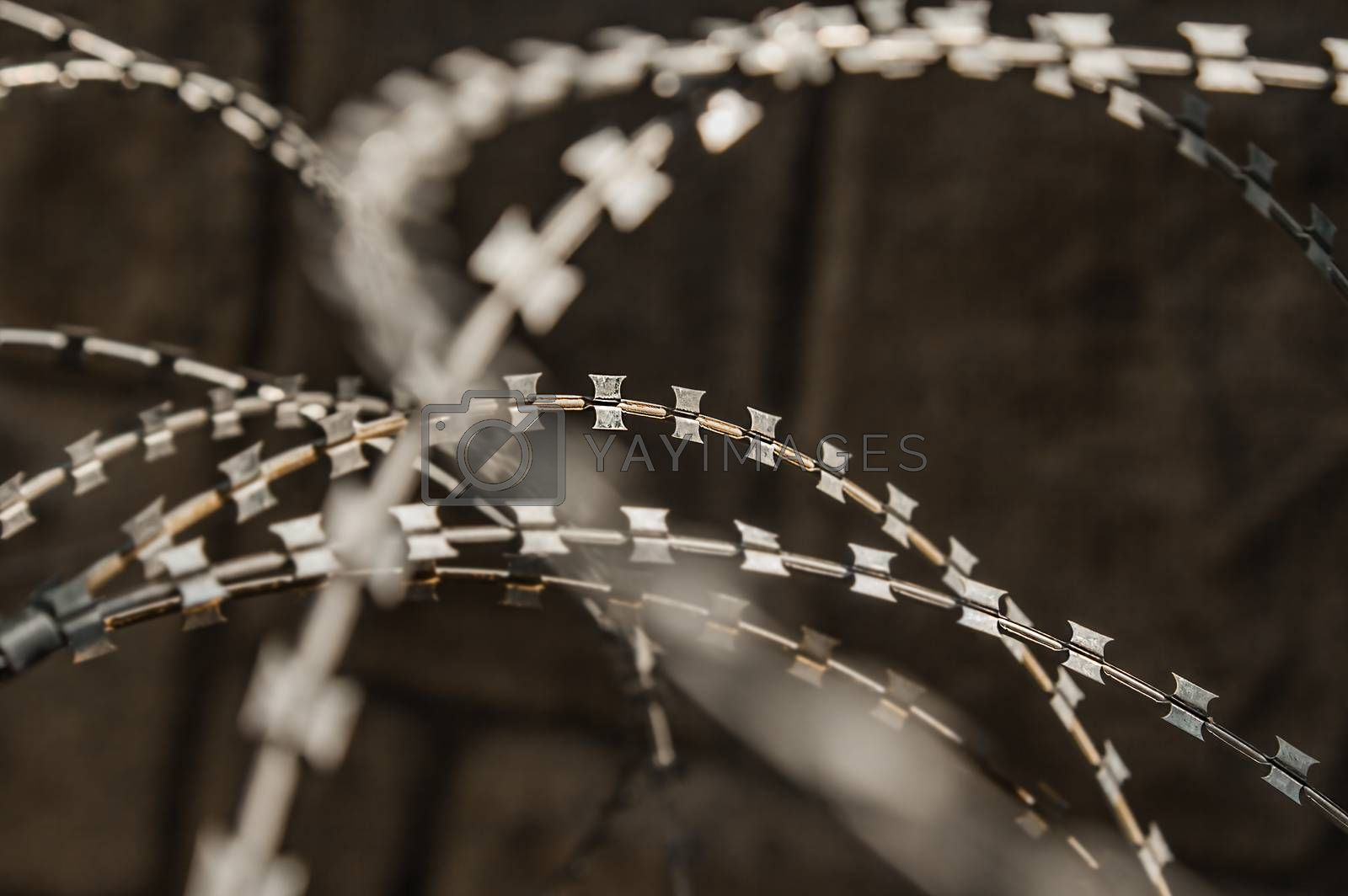 Close-up of a rusty metal razor fence wire outdoors.