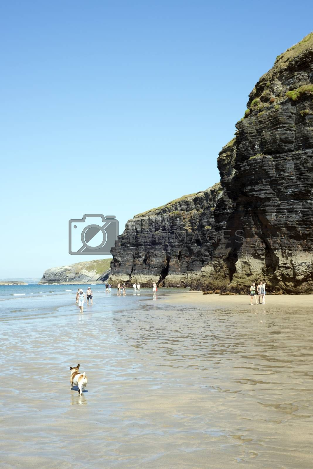 tourists and dog in ballybunion beach and cliffs on the wild atlantic way at low tide