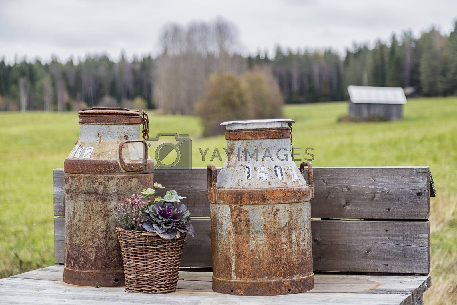 Old Milk Cans with barn in the background.
