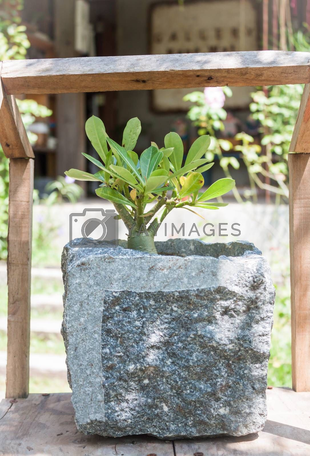 Green plant in stone pot with sunshie, stock photo