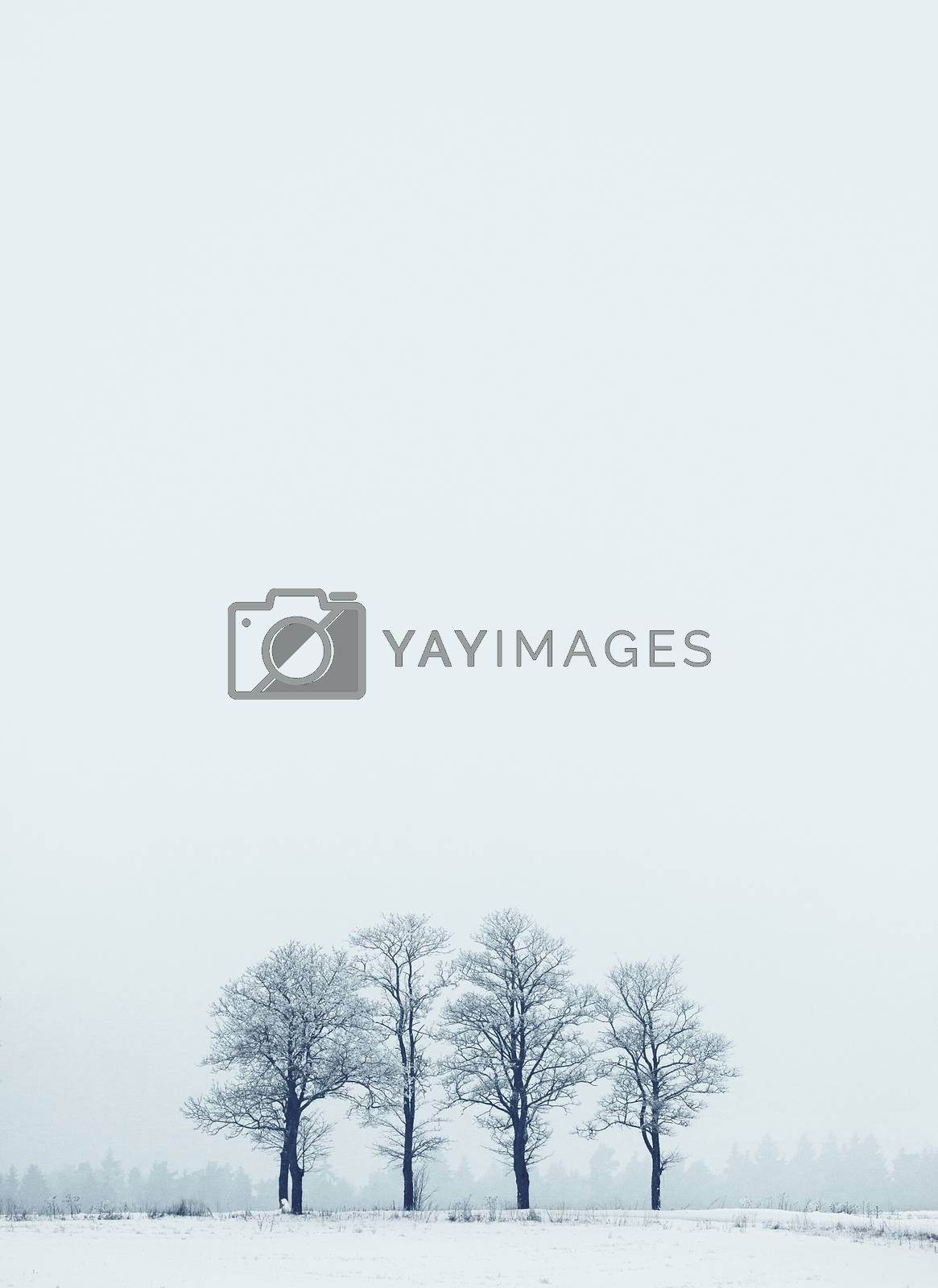 Minimal winter landscape with frozen group of trees and copy space on upper part of picture
