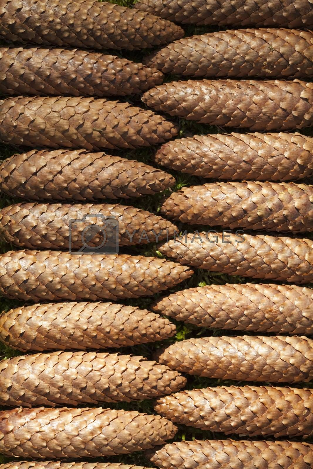 arranged brown cone as background nature