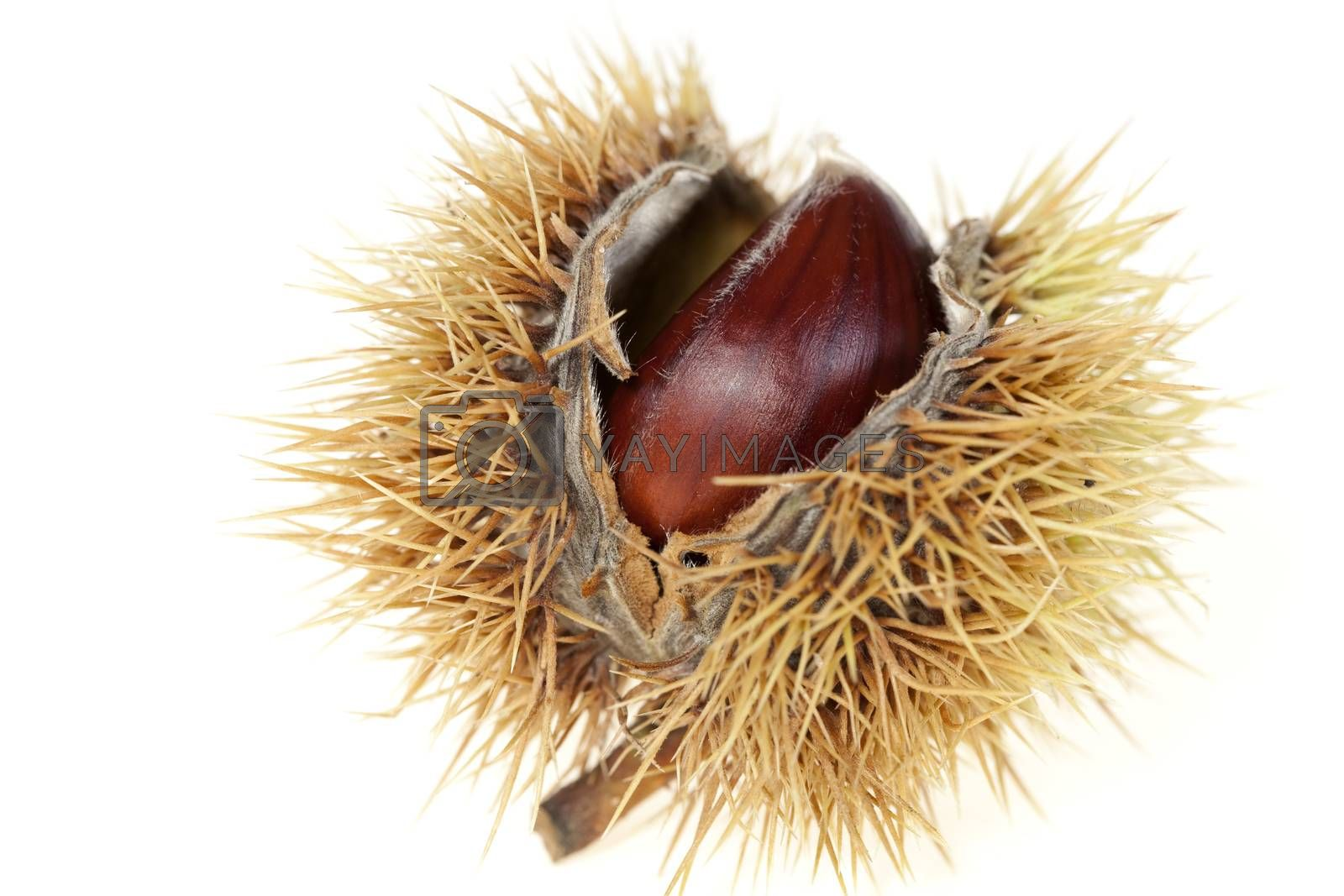 chestnuts by dabjola
