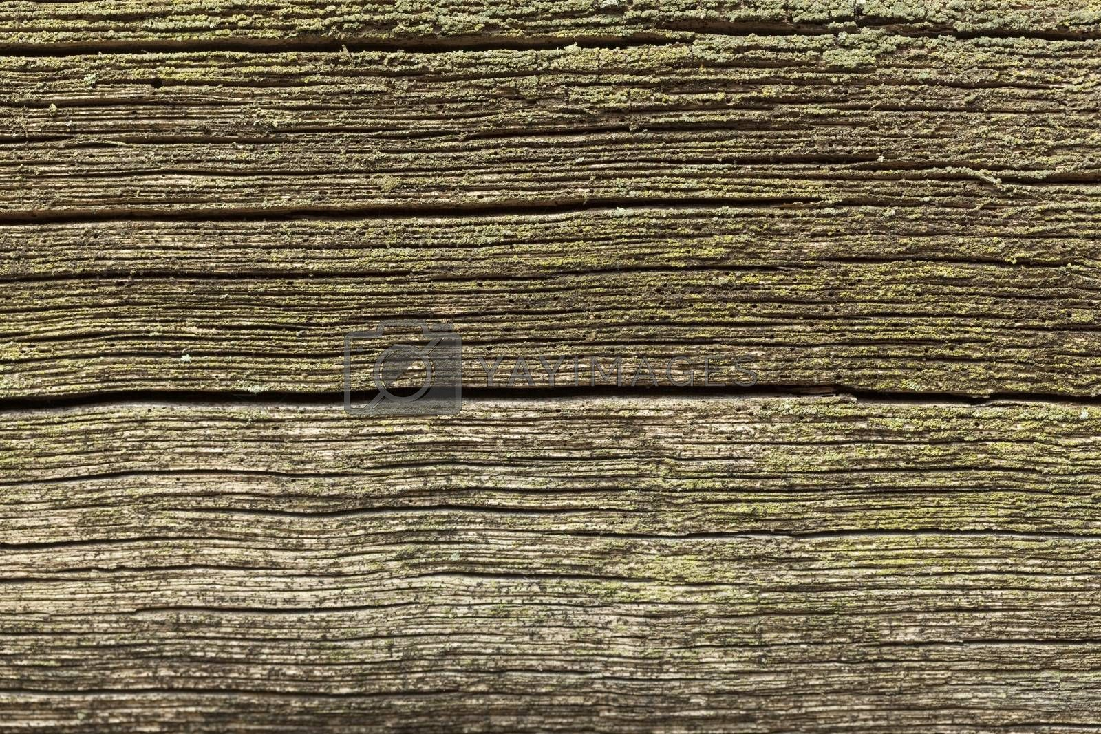old black and porous plank as background