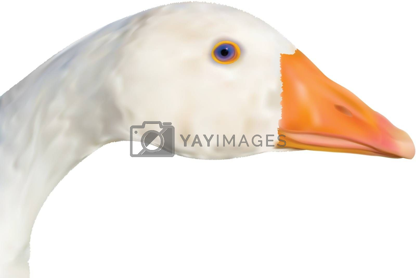 Head of the goose close up in a vector - gradient mesh