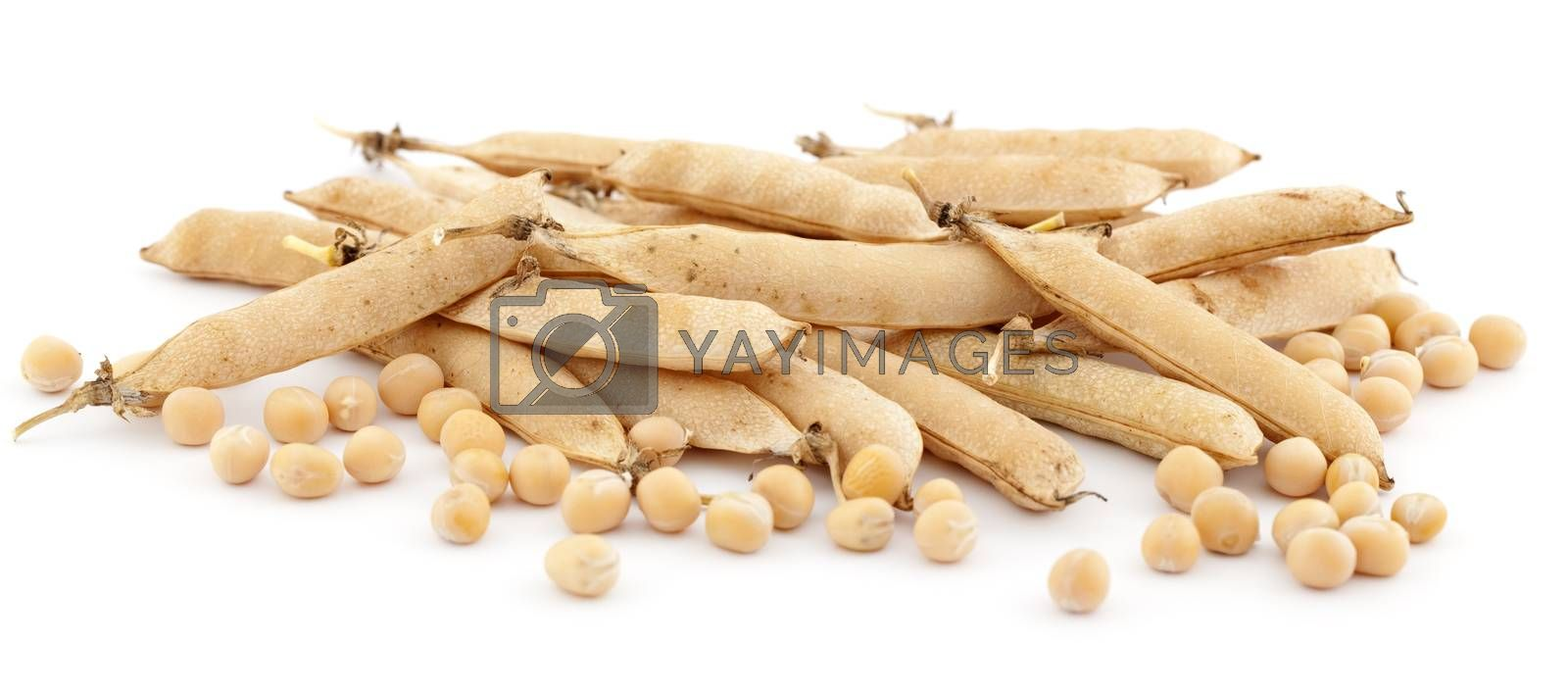 pods of pea and globule pea on white background