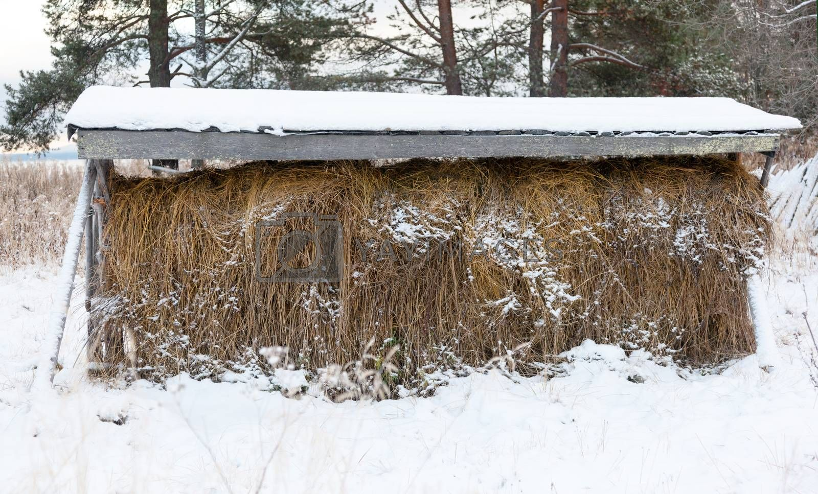 haystack under the roof on the  veshalah