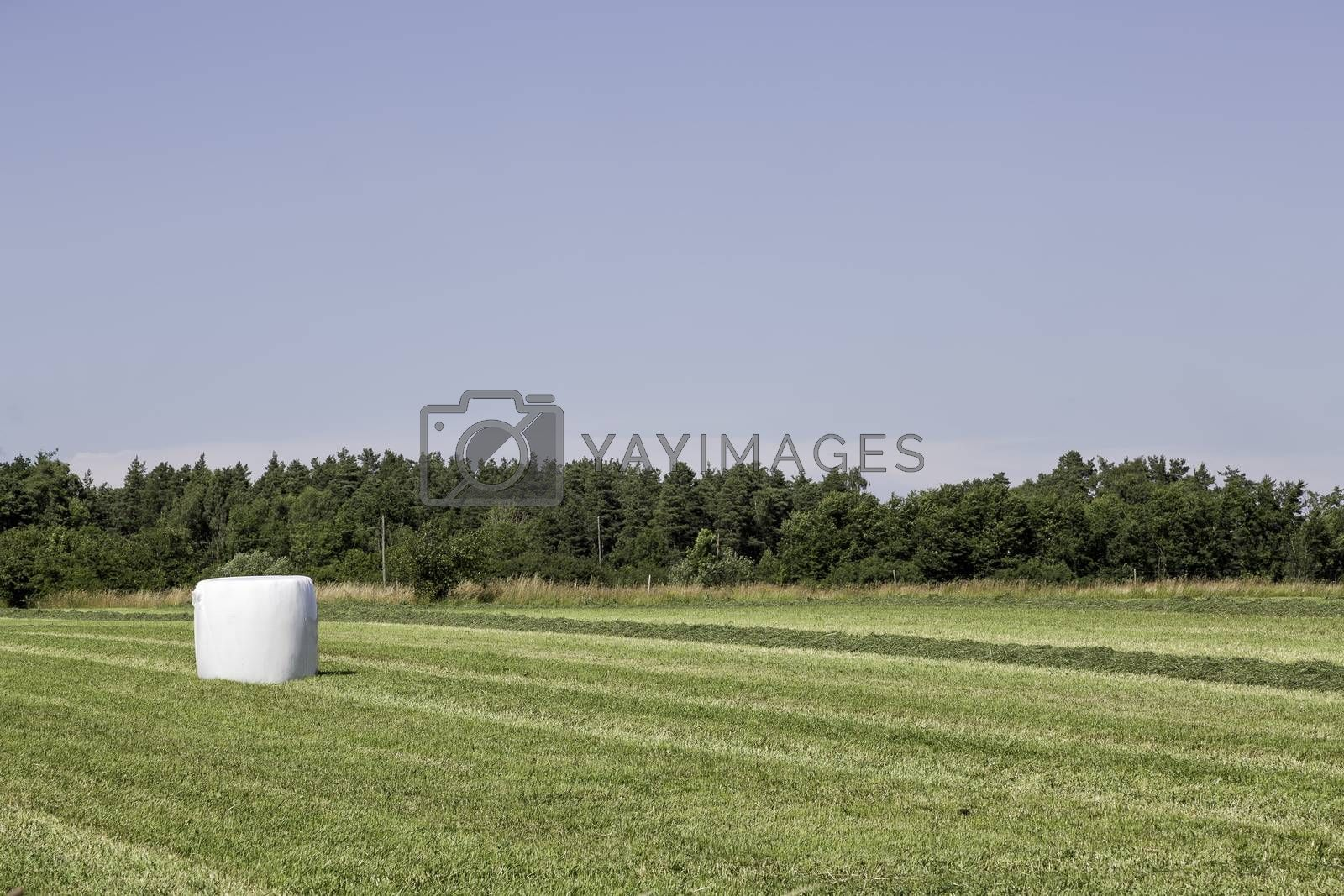 Silage Bale in Agricultural Field by Emmoth
