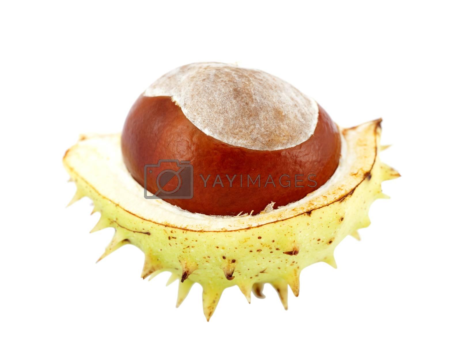 open chestnut by dabjola
