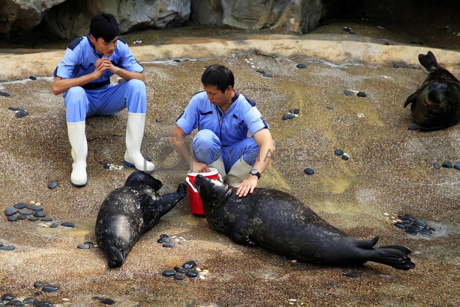 Hong Kong, Hong Kong - March 30, 2012:  veterinarians check the health status of sea lions in The grand aquarium, Ocean Park on March 30, 2012 in Hong Kong