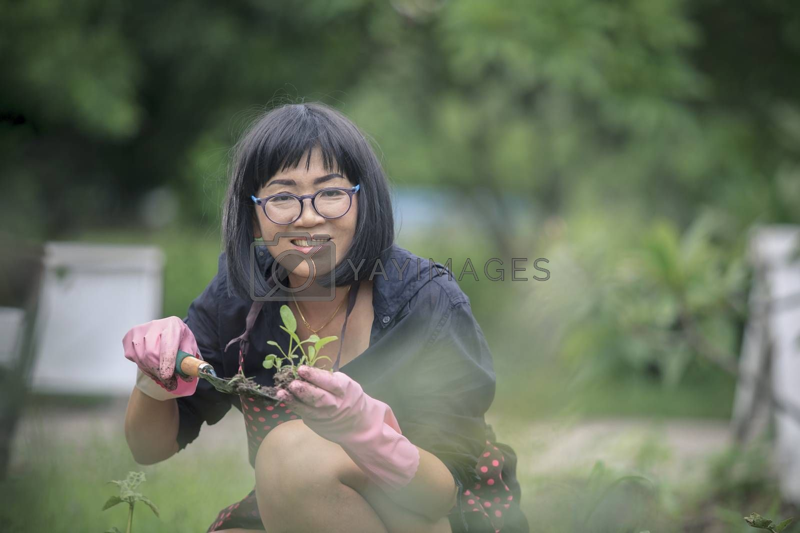asian woman planting organic vegetable at  home garden ,people h by khunaspix