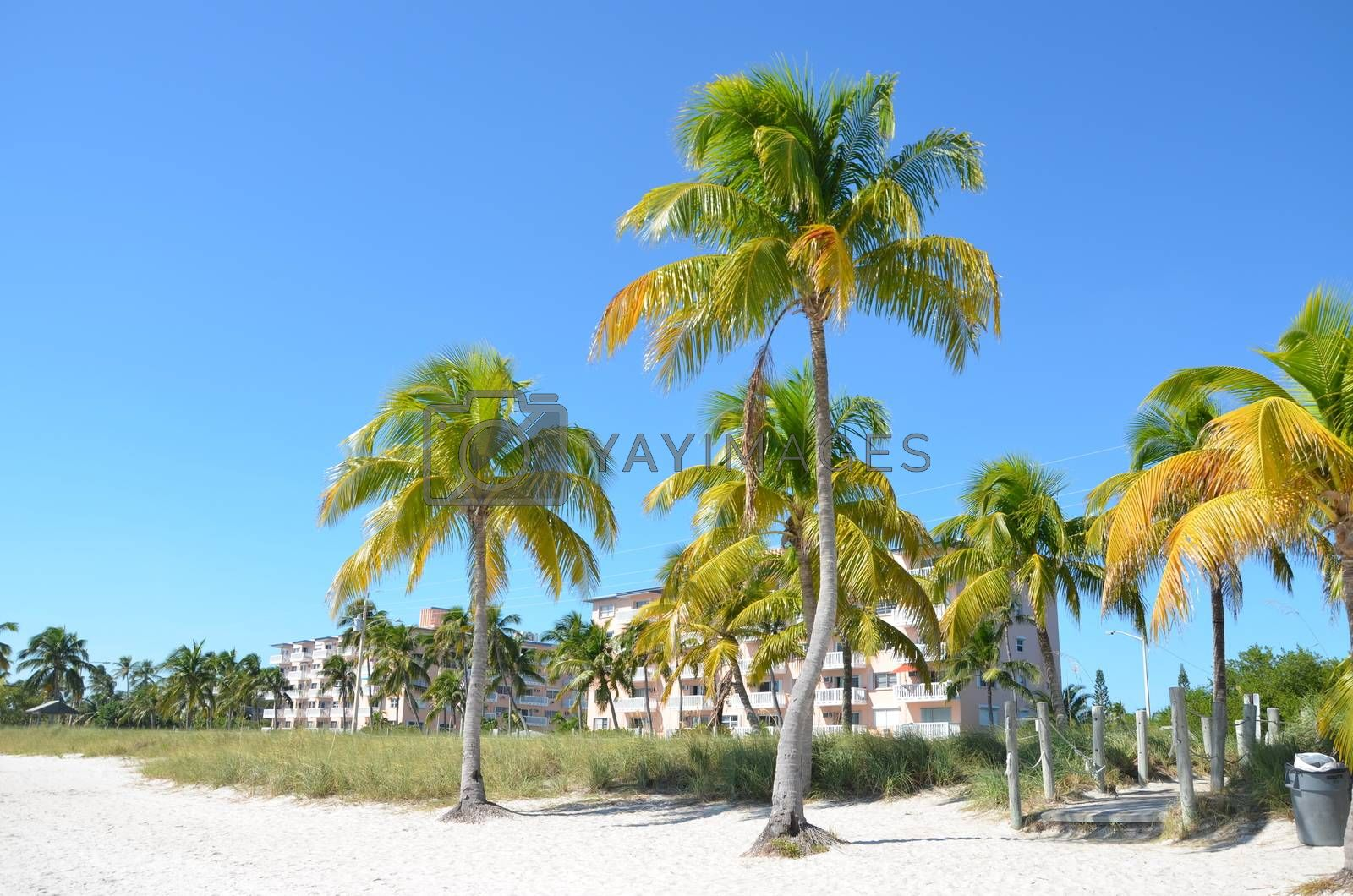 Palm trees on the coast in Key West Florida