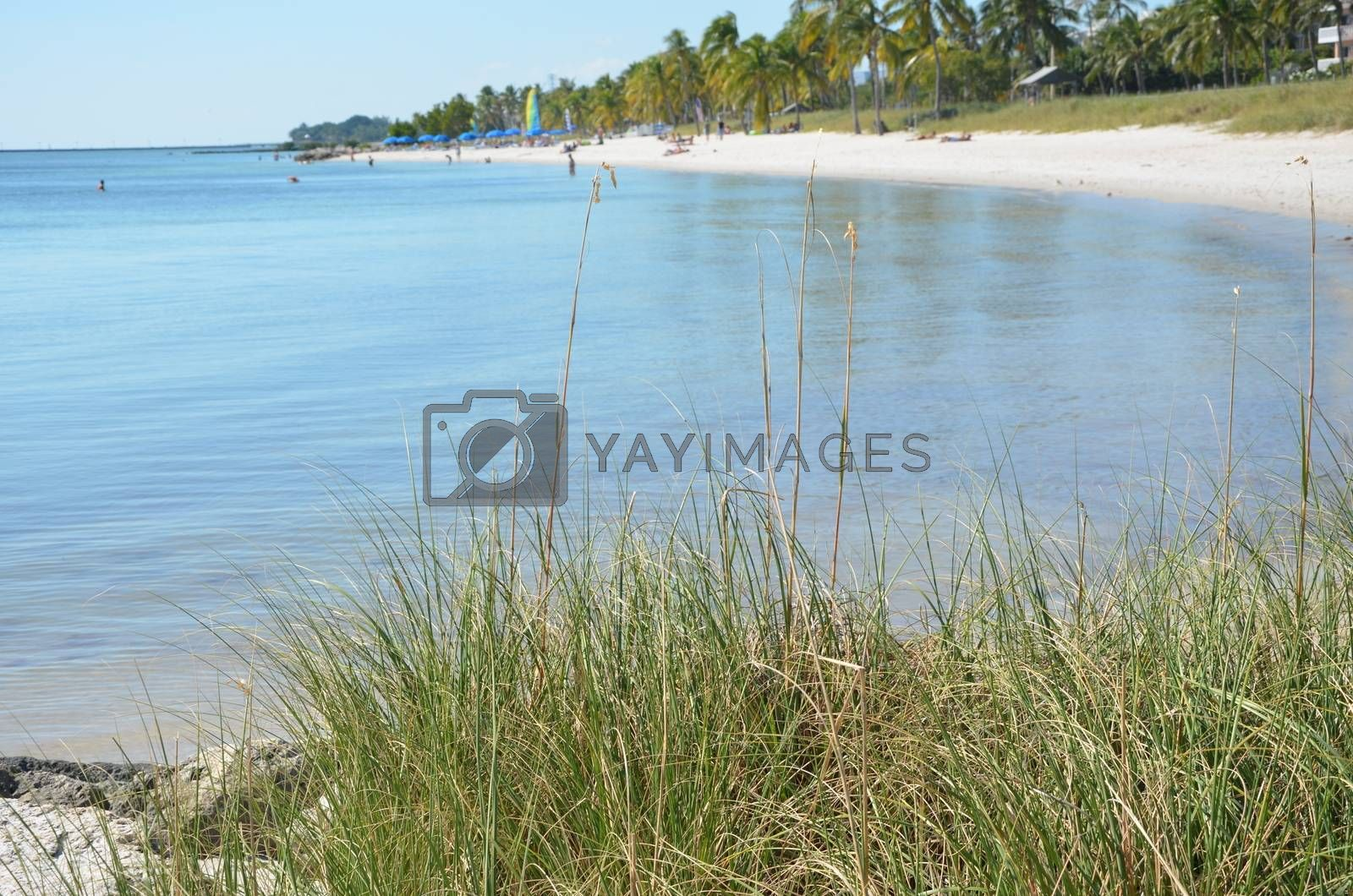 A view of the shore in Key West Florida