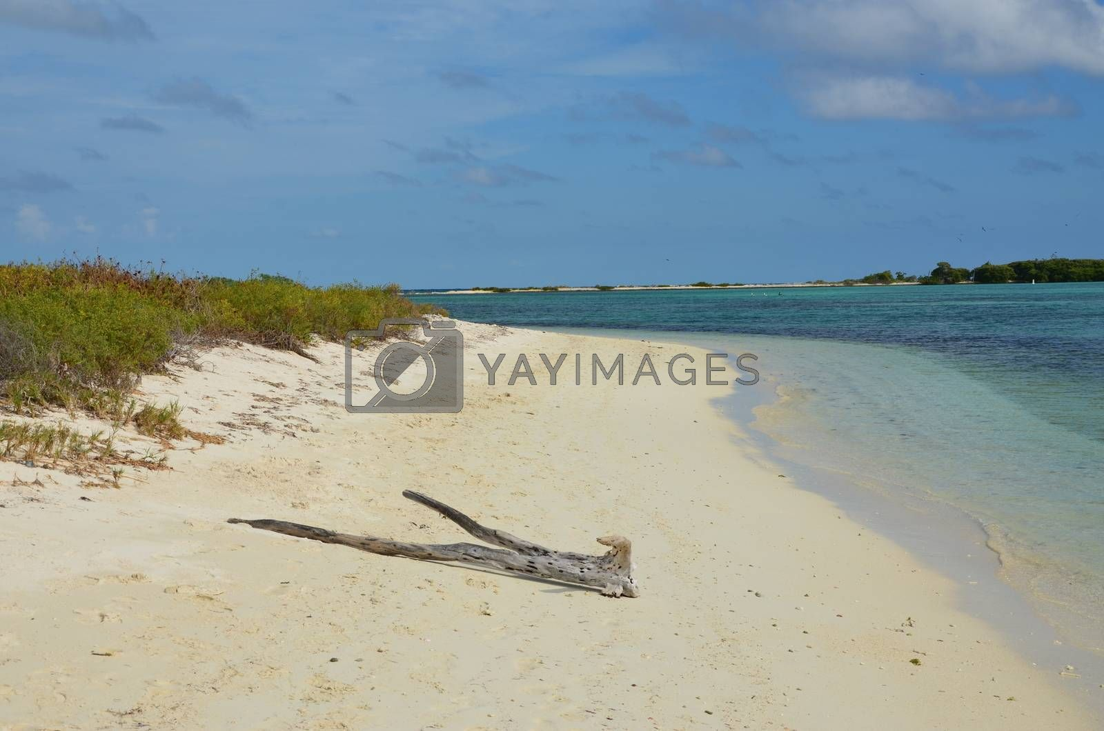 A remote beach on Dry Tortugas a small isalnd off the coast of florida.