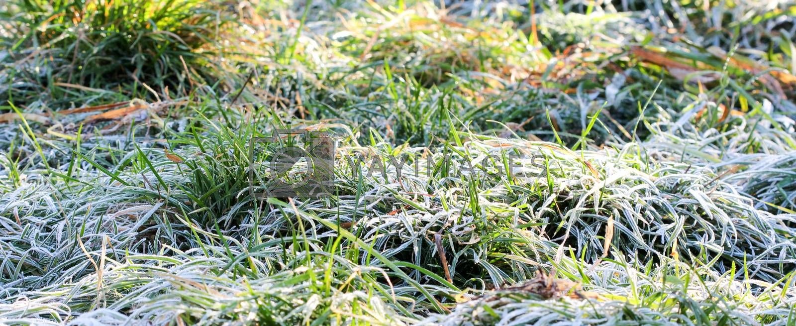 picture of a november morning frost on a plants